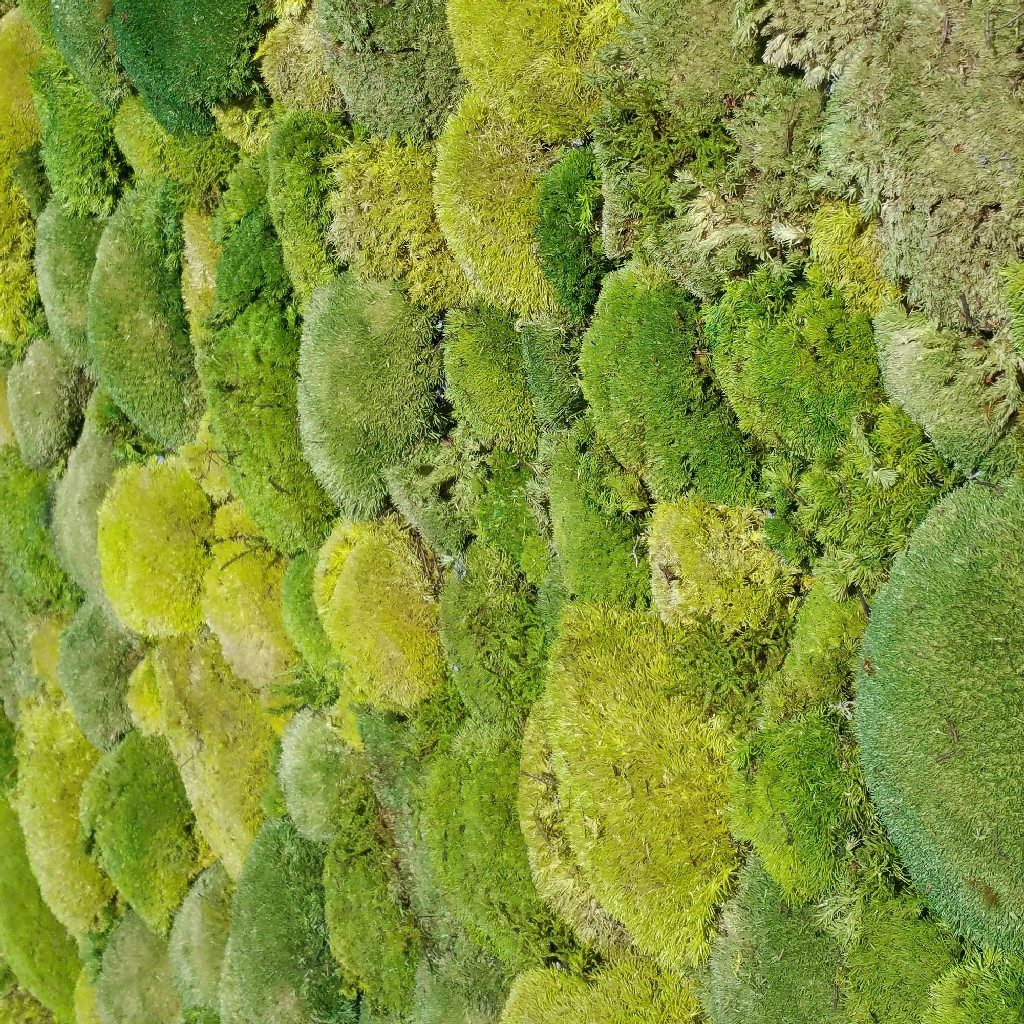 Pincushion Moss or Bol Moss in the colors spring green and moss green