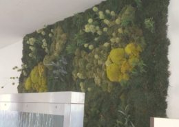 Moss wall design with a mix of different mosses, ferns and grasses in a office
