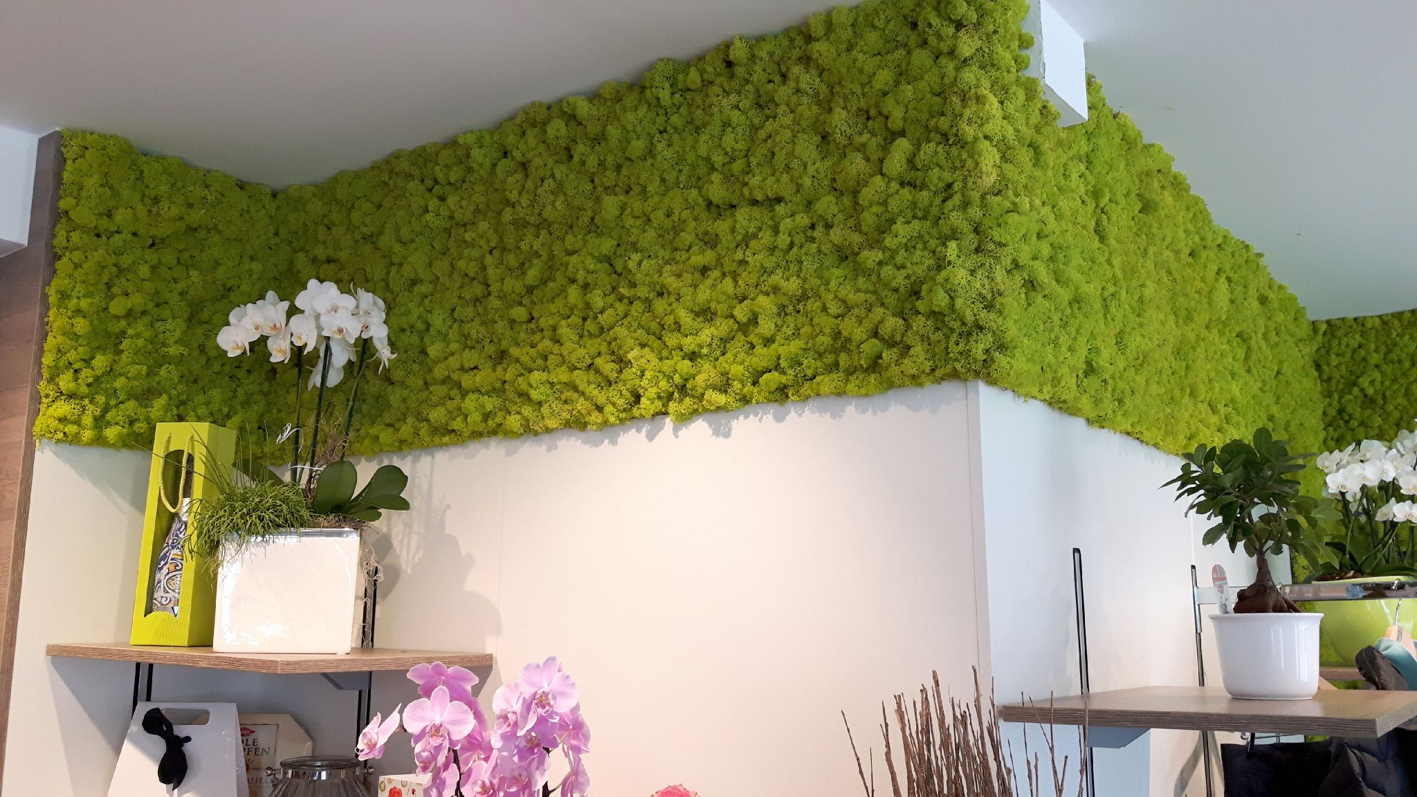 Moss Walls Creative And Individual Wall Design With